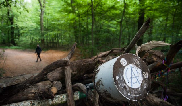 Niemcy: Apel o pomoc aktywistów z lasów Hambacher