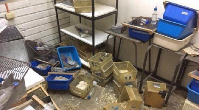 Santiago, Chile: Zdewastowanie uniwersyteckiego laboratorium i wyzwolenie 120 szczurów